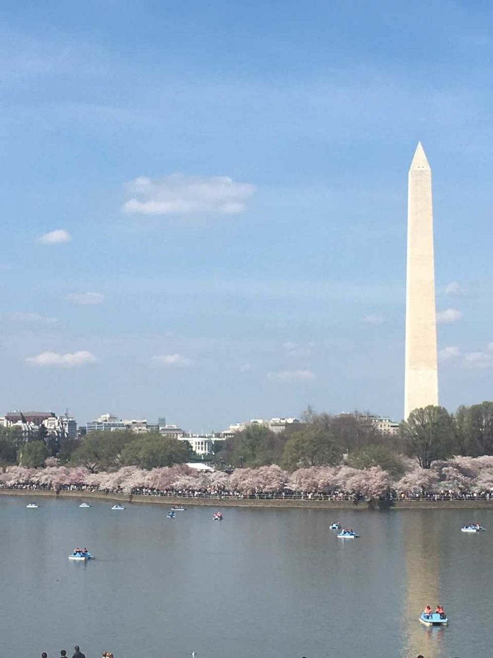 The 4 Best Places To Find Cherry Blossoms In Washington, D.C.