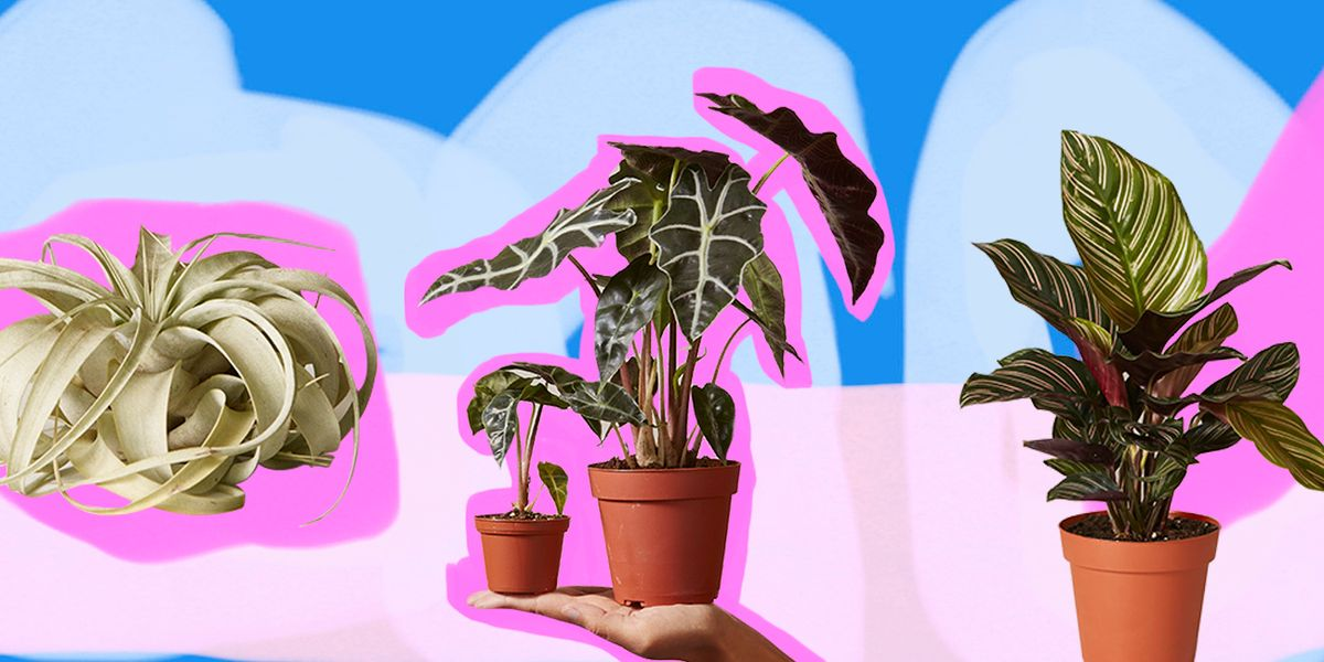 Here's What's Next In Instagram-Famous Plants