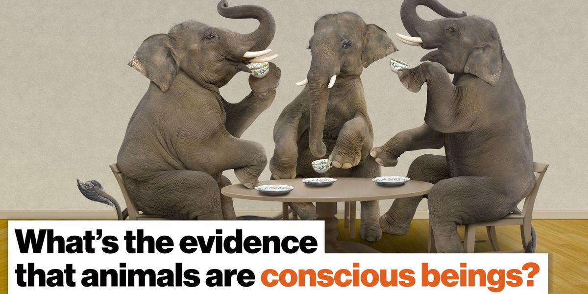 What evidence is there that animals are conscious beings?