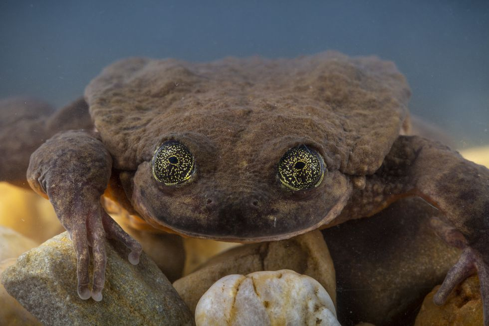 People banded together to find the world's loneliest frog true love — and it might have just worked.