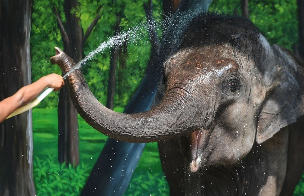 India has opened a first of its kind elephant hospital and it's adorable.