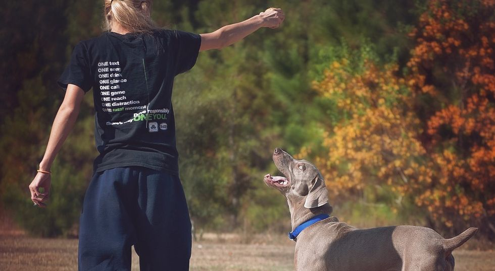An Open Letter To Those Abusing The Freedom Of Emotional Support Animals