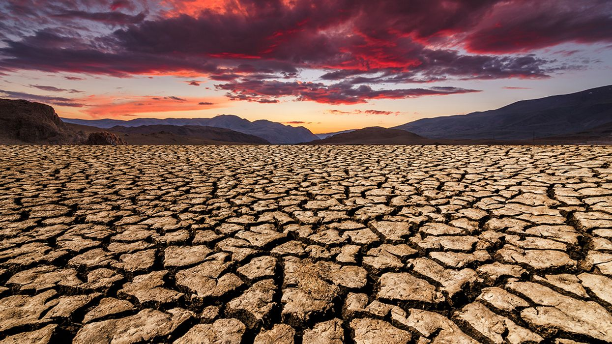 It Will Take 10 Million Years to Recover From This Man-Made Apocalypse