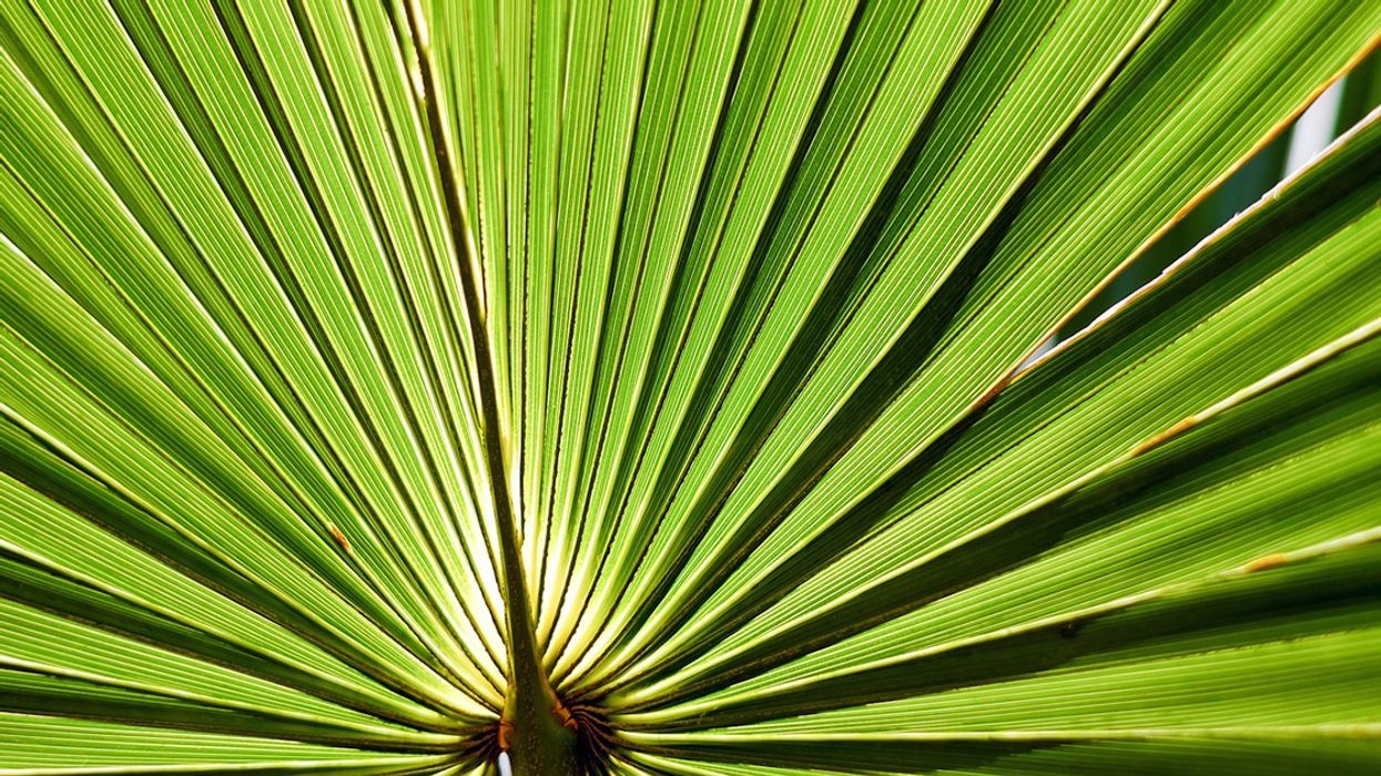 5 Promising Benefits and Uses of Saw Palmetto
