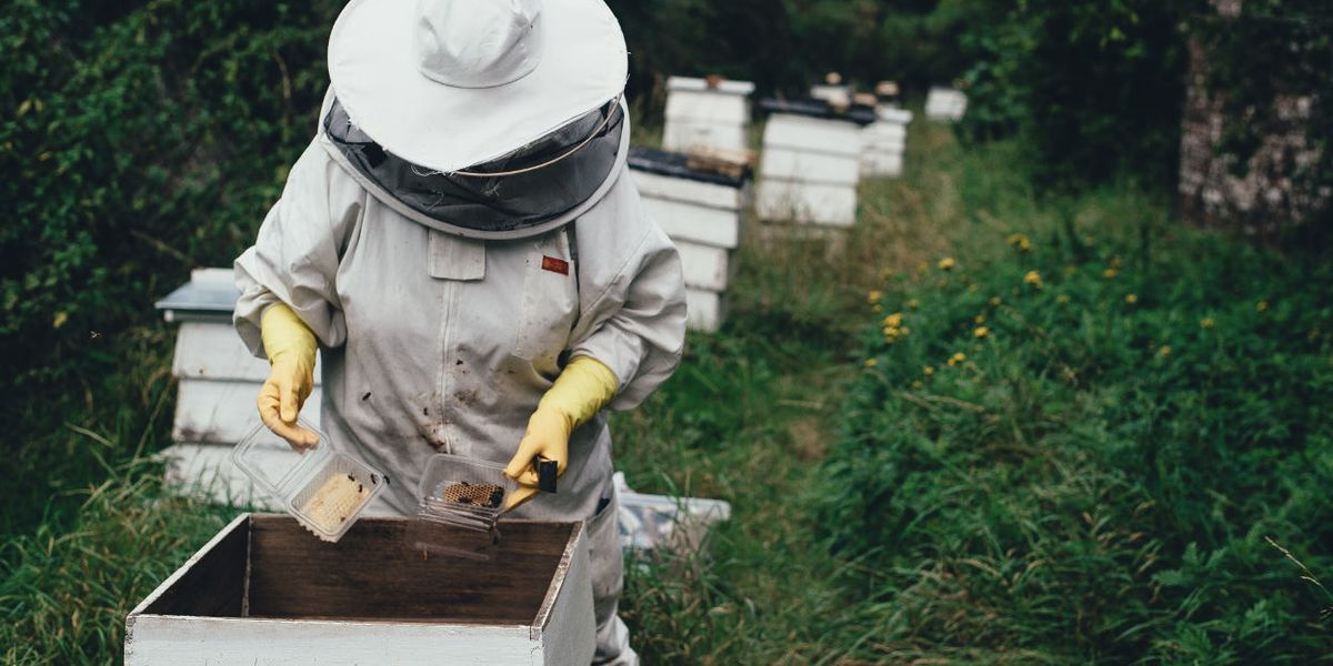 Weed killer residues found in 98 percent of Canadian honey samples