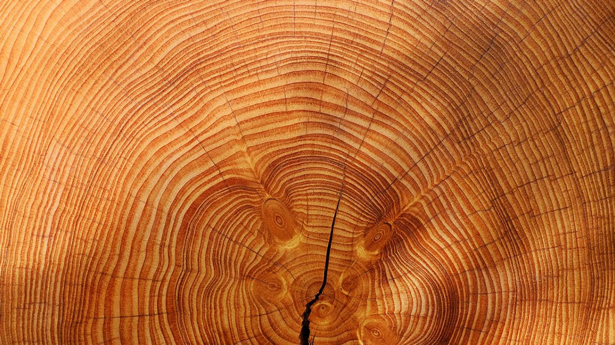 Tree Rings Reveal Climate Secrets of the Forest