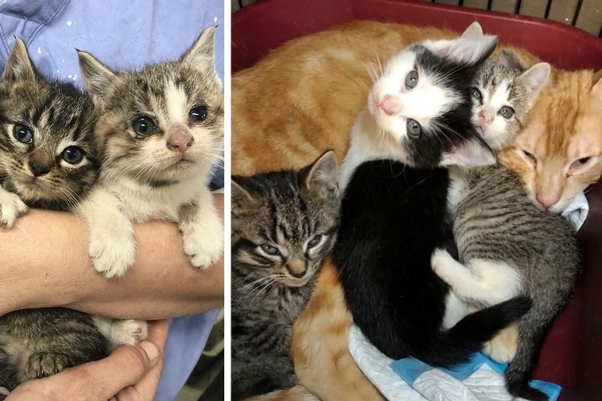 Shy Cat Tries to Hide From Everyone Until He Meets 3 Kittens Who Turn His Life Around