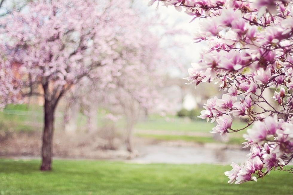 https://pixabay.com/photos/magnolia-trees-springtime-blossoms-556718/