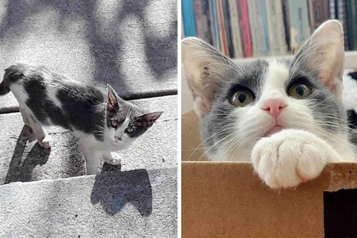 Stray Kitten Wanders from House to House Until She Finds Someone Who Won't Leave Her Behind