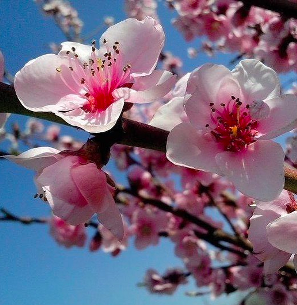 5 Reasons Why Spring Is The Best Season