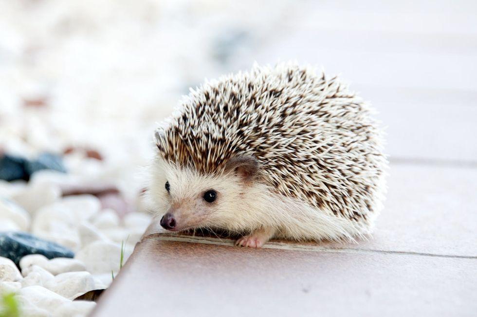 https://www.pexels.com/photo/animal-pet-cute-baby-50577/