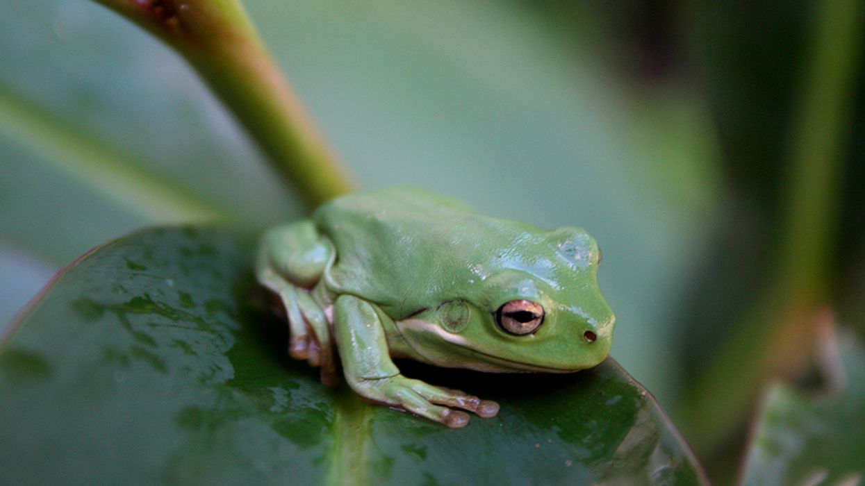 'Most Destructive Pathogen Ever' Has Created Zombie-Like Apocalypse for World's Amphibians