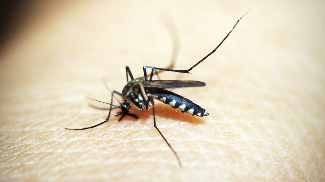 Rising Temperatures Will Help Mosquitos Infect a Billion More People