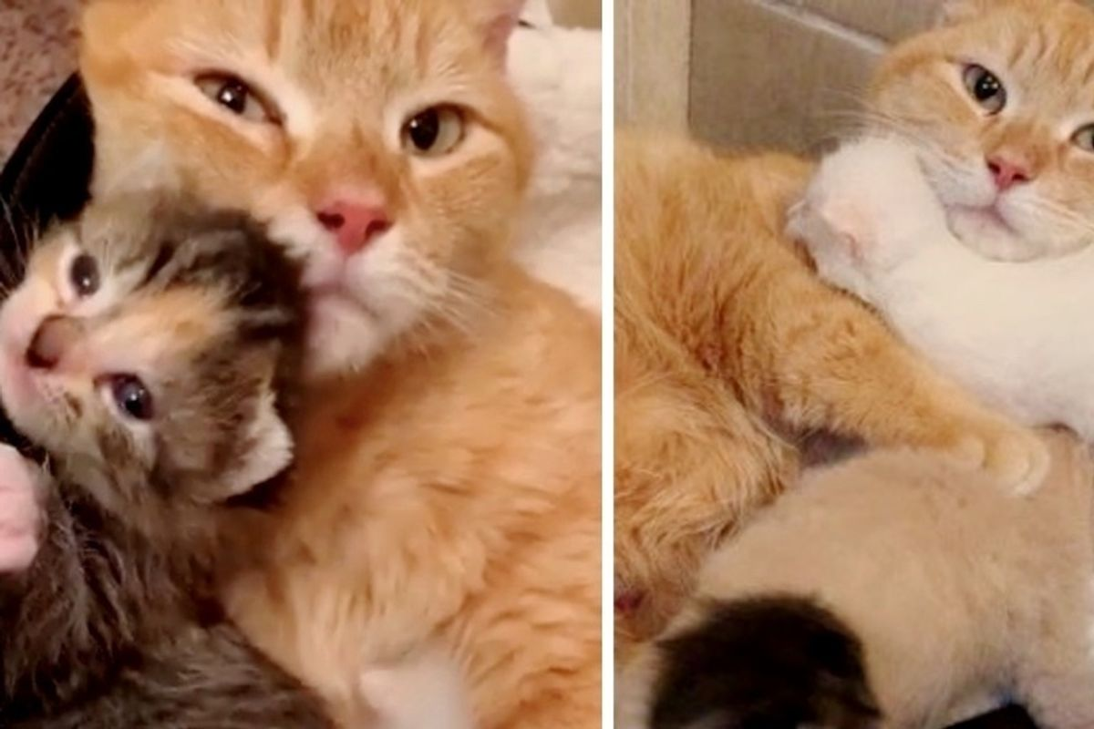 Stray Cat So Happy When Her Kittens are Saved Just in Time, She Won't Leave Their Side