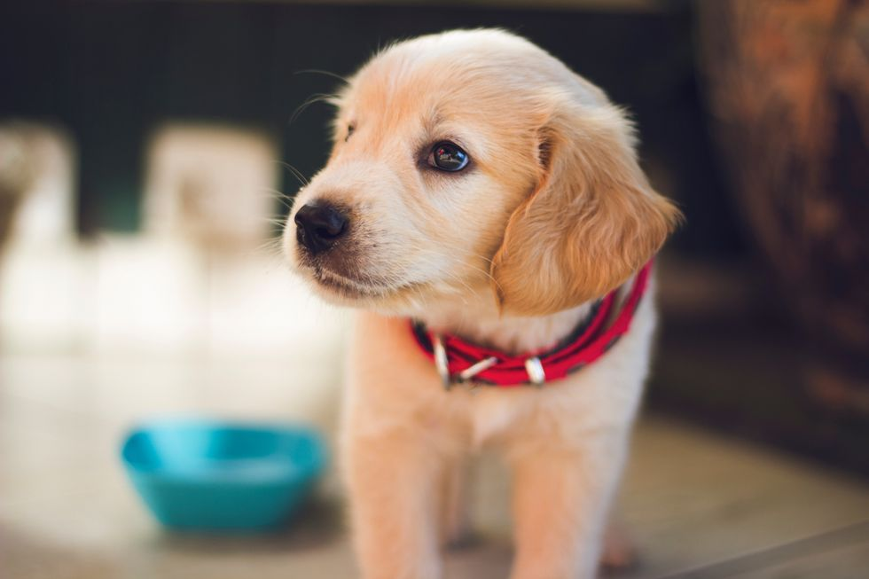 5 Reasons Why You Should Adopt A Dog If You Don't Have One Already