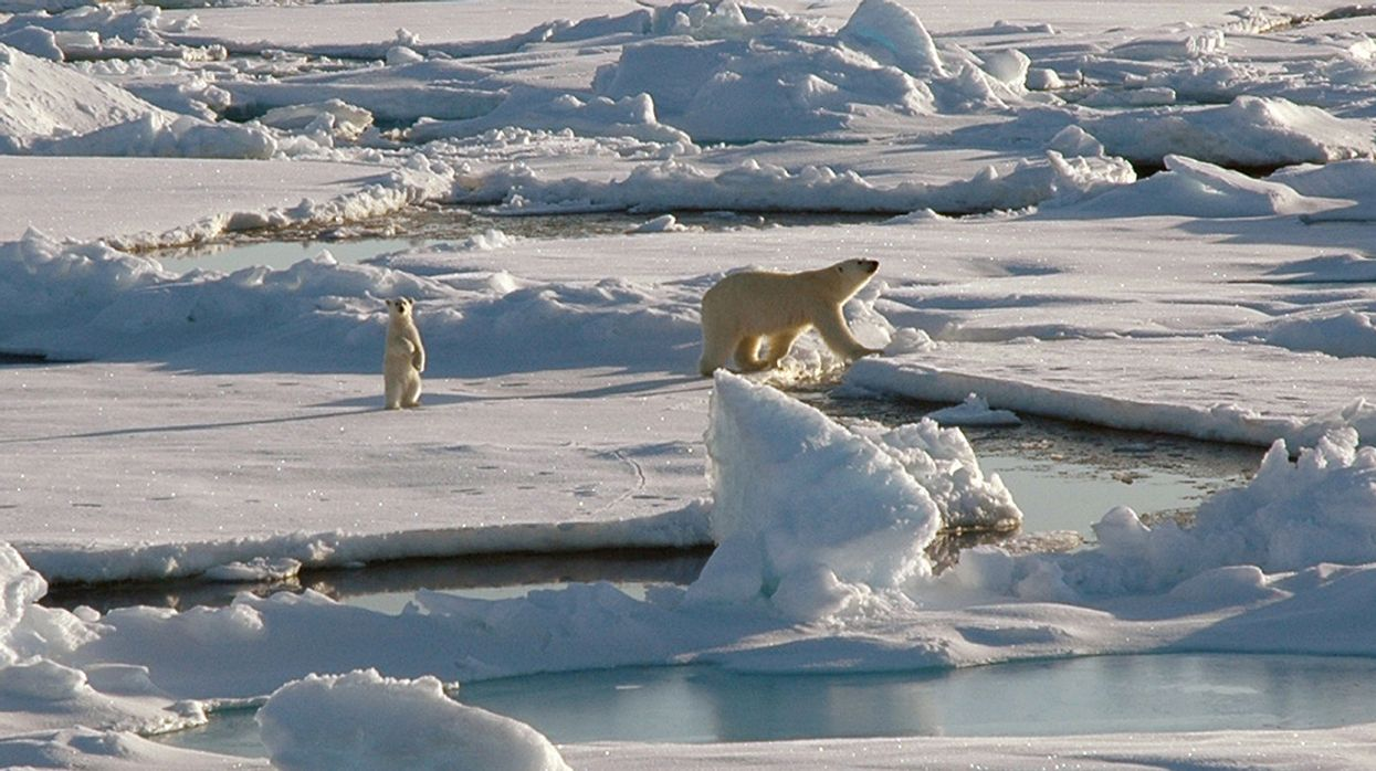 Judge Says Trump's Plan to Allow Drilling in Arctic Ocean Is 'Unlawful and Invalid'