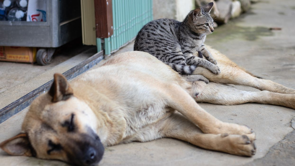 Why do people prefer dogs over cats? They're more controllable, study finds.