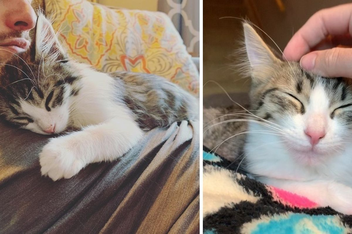 Kitten is Determined to Get Adopted After Having Gone Through 3 Foster Homes
