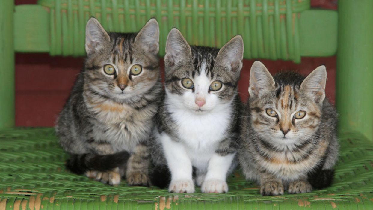 USDA to Stop Killing Kittens for Research