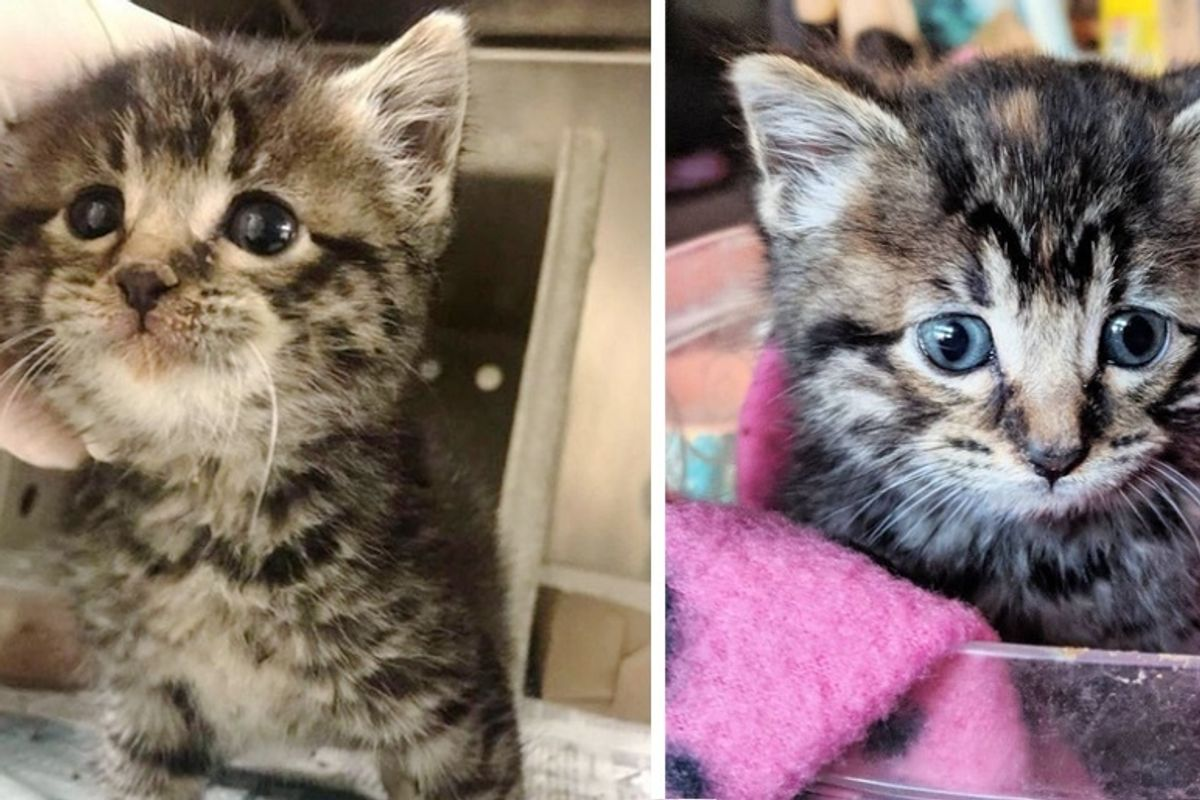Stray Kitten So Happy When She is Finally off the Streets and Has Her Life Turned Around