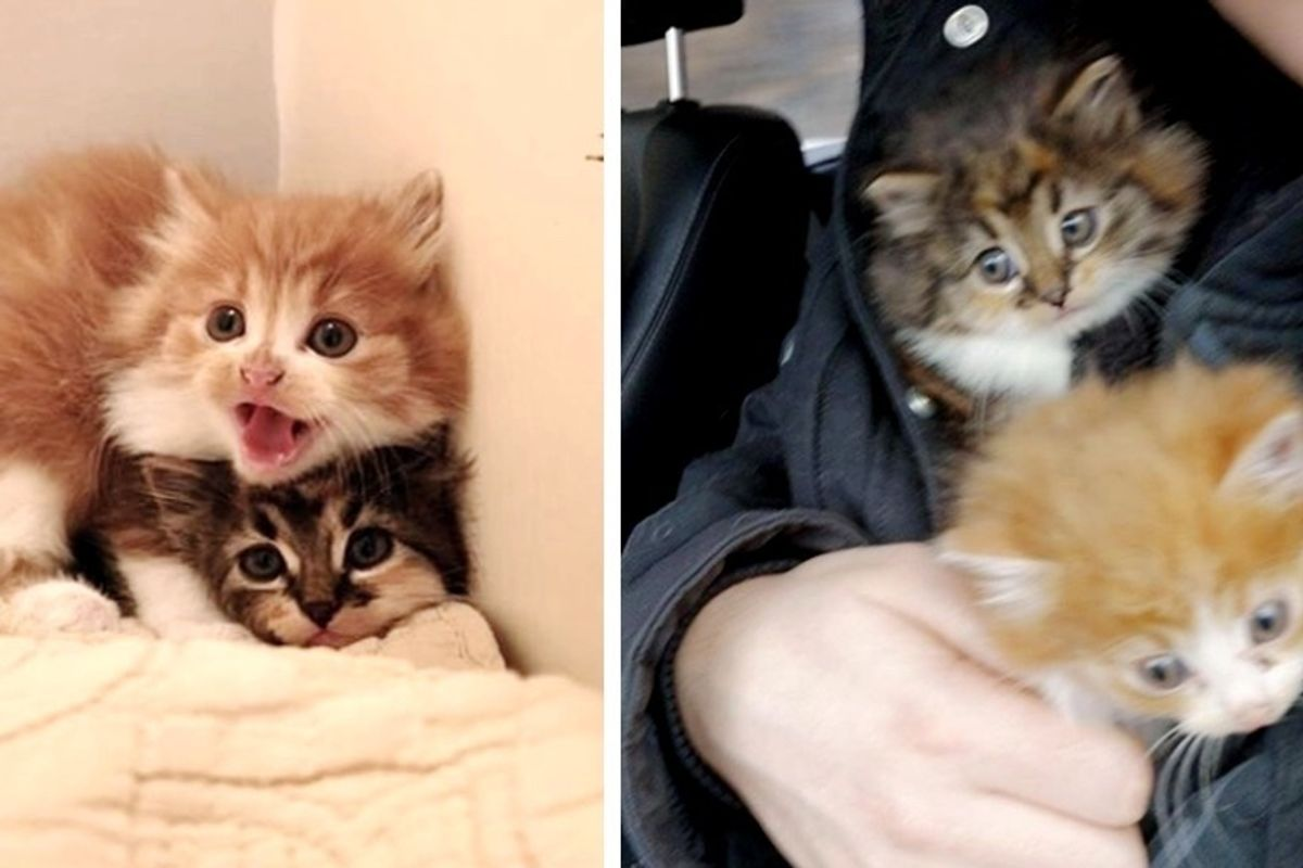 Cat Brought Home 3 Kittens that Needed Help But They Weren't Hers
