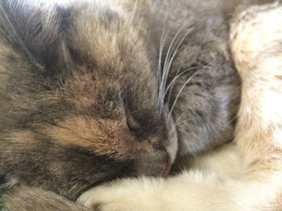 6 PURRfectly Good Reasons To Make A Cat Your Best Friend