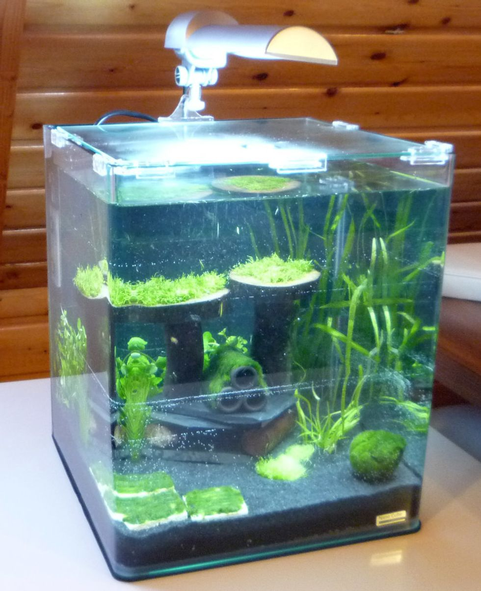 How To Set Up And Maintain A Healthy And Attractive Nano Aquarium