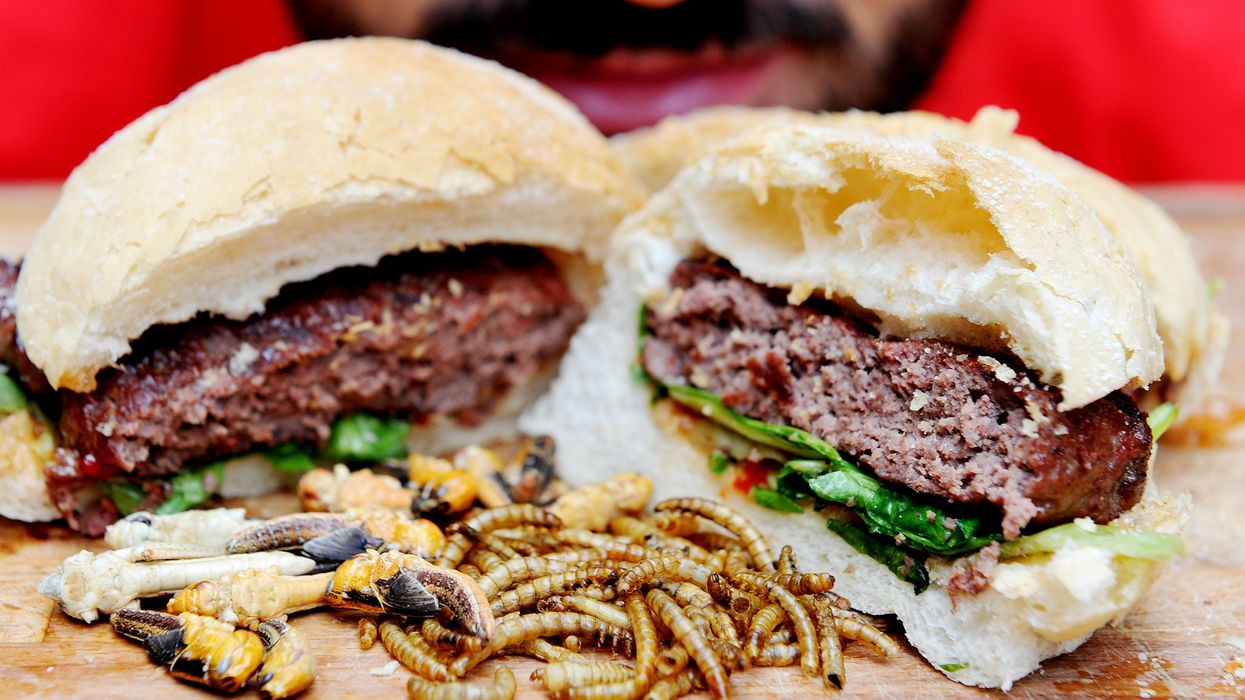 Are you ready for cricket burgers?