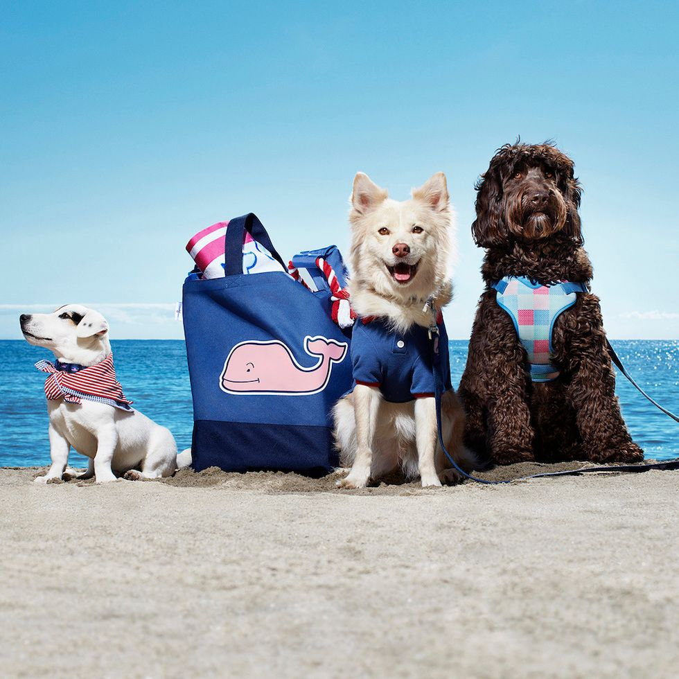 Vineyard Vines for Target Pet Accessories