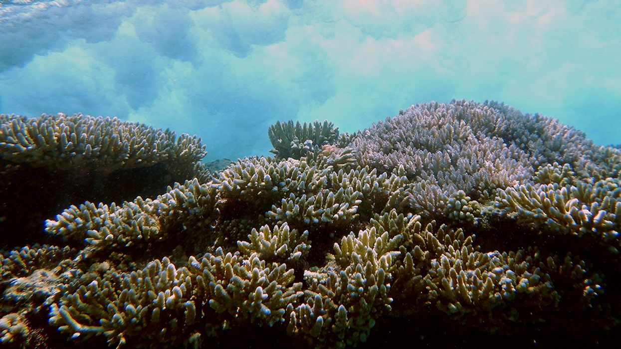 Coral Reefs Provide Flood Protection Worth $1.8 Billion Annually — Another Key Reason to Protect Them