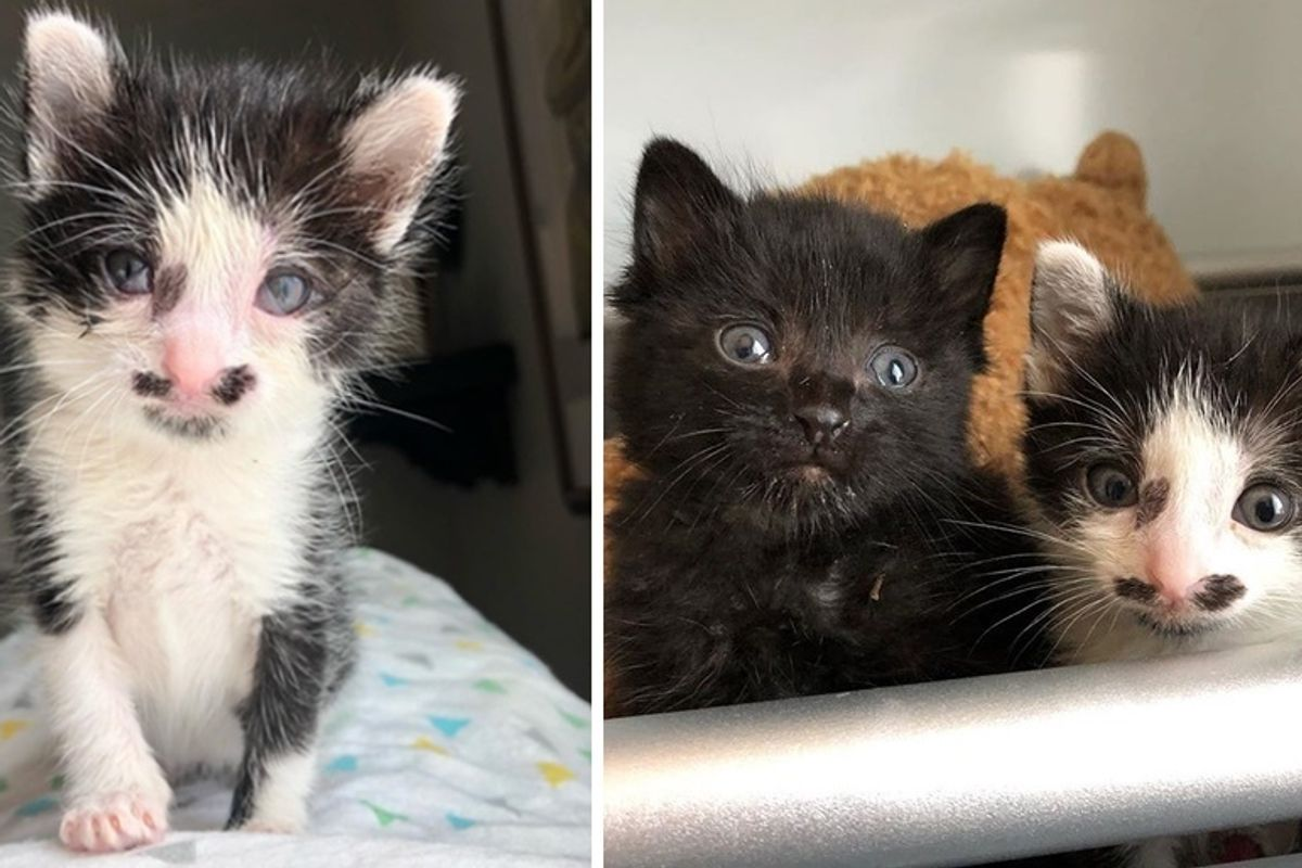Man Hears Kittens Cries and Finds Them Near Dumpster, Meowing for Help