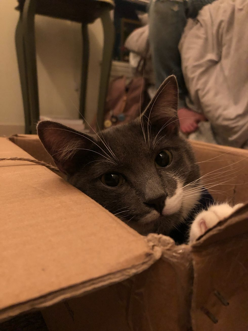 20 Things I Have Learned As A New Cat Mom