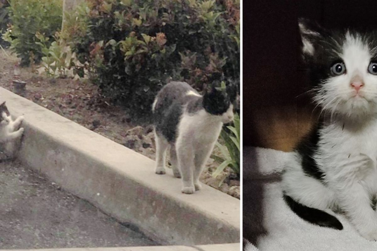 Rescuers Help Feral Cat and Come Back to Find Her Kitten at Auto Shop
