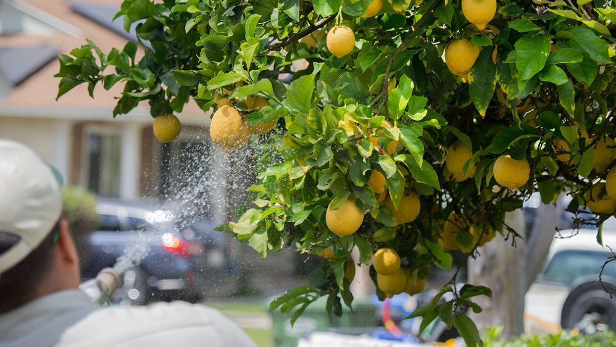 California, Nation's Top User of Chlorpyrifos, Announces Ban on Brain-Damaging Pesticide