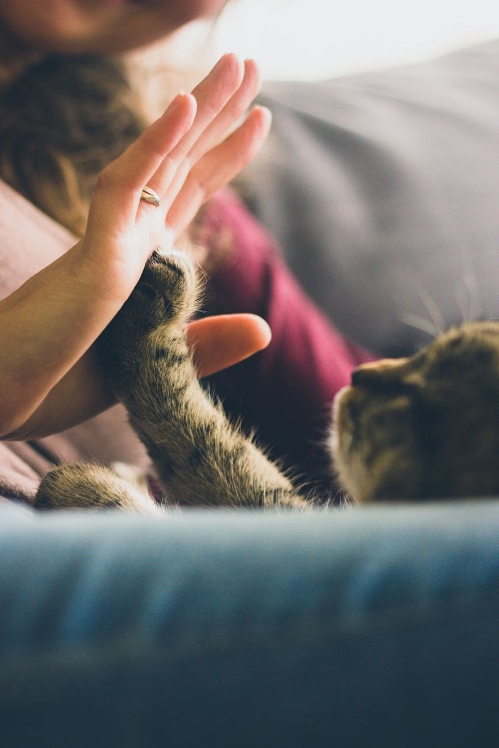 Declawing Is Never An Option