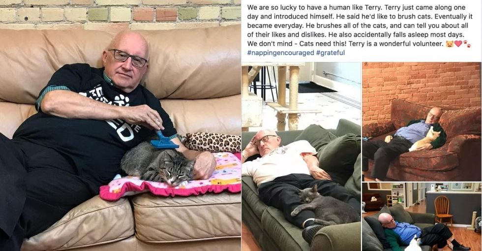 A retired Spanish teacher went viral after falling asleep brushing cats.