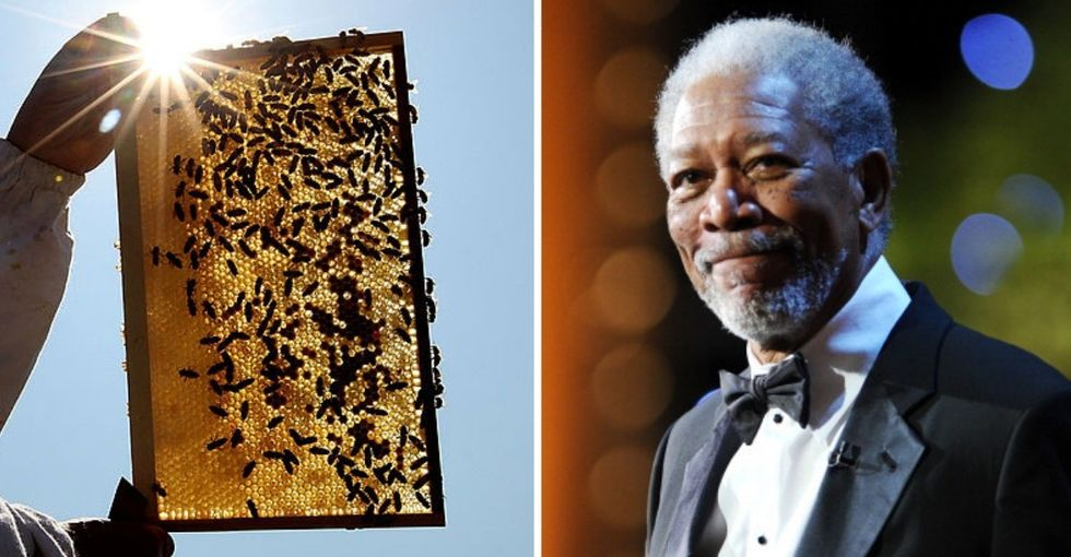 High fives to Morgan Freeman for transforming his ranch into a 124-acre honeybee sanctuary.