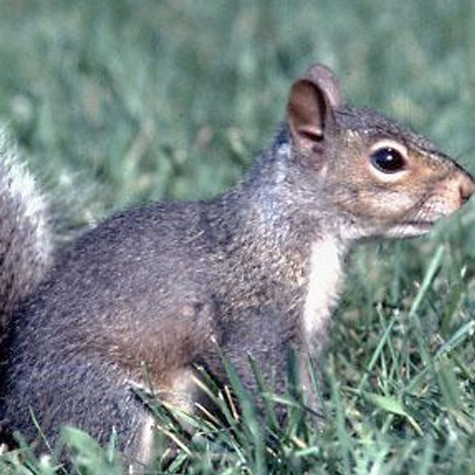 Is It Just Me, Or Is This Squirrel Starting To Make A Lot Of Sense?