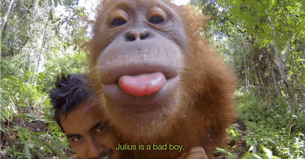 Come For The Adorable Orangutans. Stay Because There Is Something You Should Know About Them.