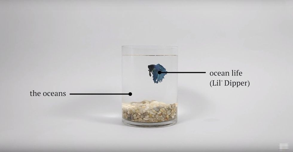 Sea snails are dissolving, and fish are getting lost — all thanks to greenhouse gases.
