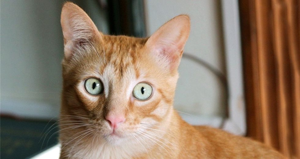 Here's all you ever wanted to know about the parasite in cat poop.
