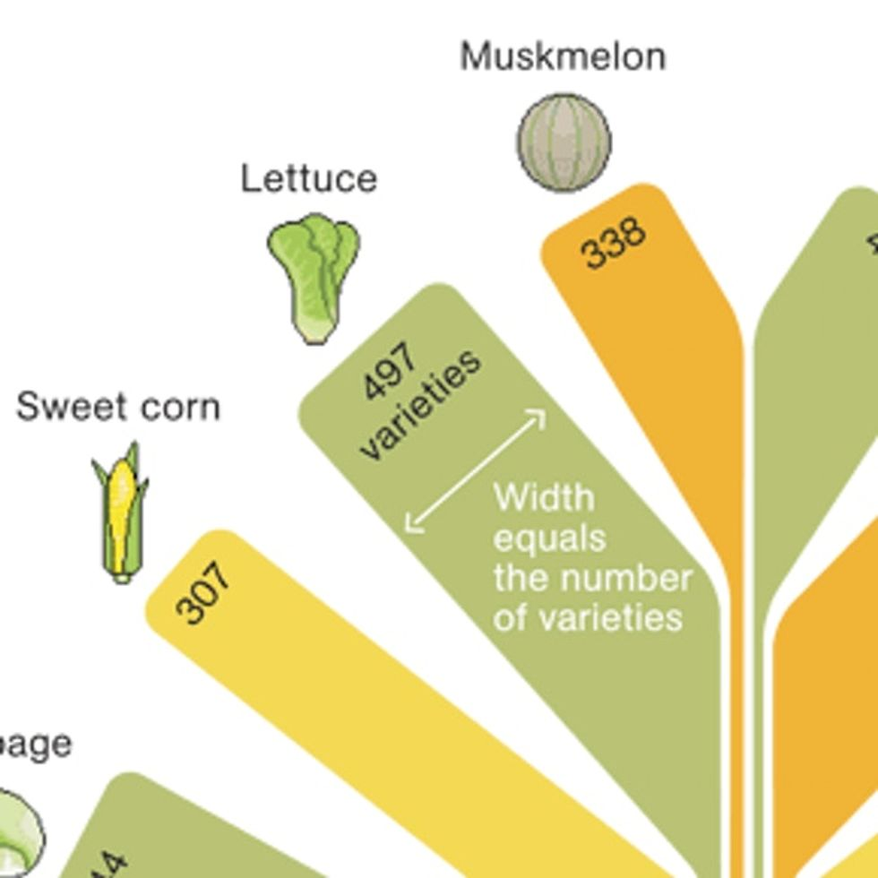 We Used To Have 307 Kinds Of Corn. Guess How Many Are Left?