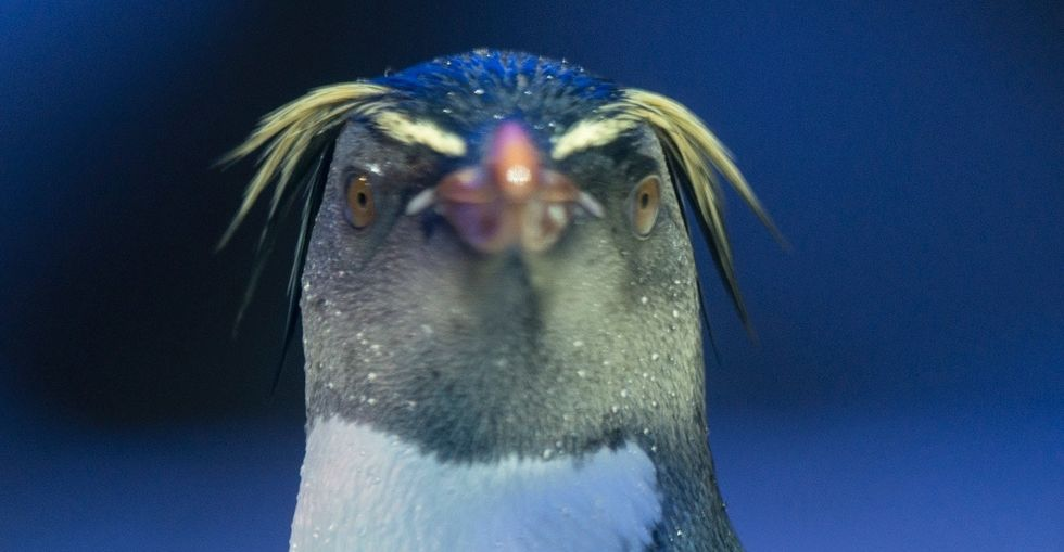 When an aquarium needed a name for a baby penguin, they knew just who to ask.