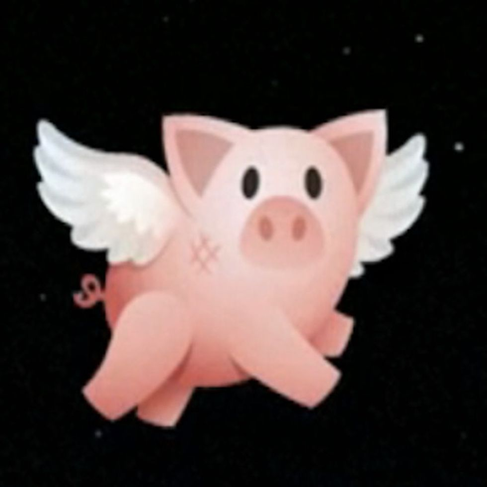 Flying Pig Rescues Animals From Factory Farming [VIDEO]