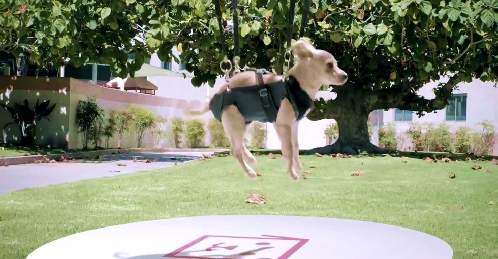 The tap of an app, and your new, sweet puppy is flown right to your door by drone. Wait, what?