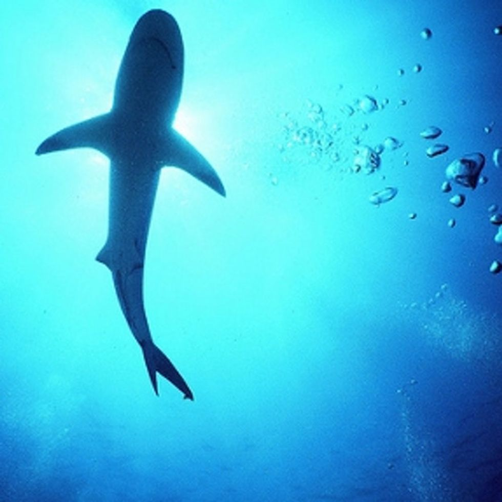 Sharks Kill 5 People Per Year. We Kill 8,000 Sharks Per Hour. This Seems Fishy To Me.