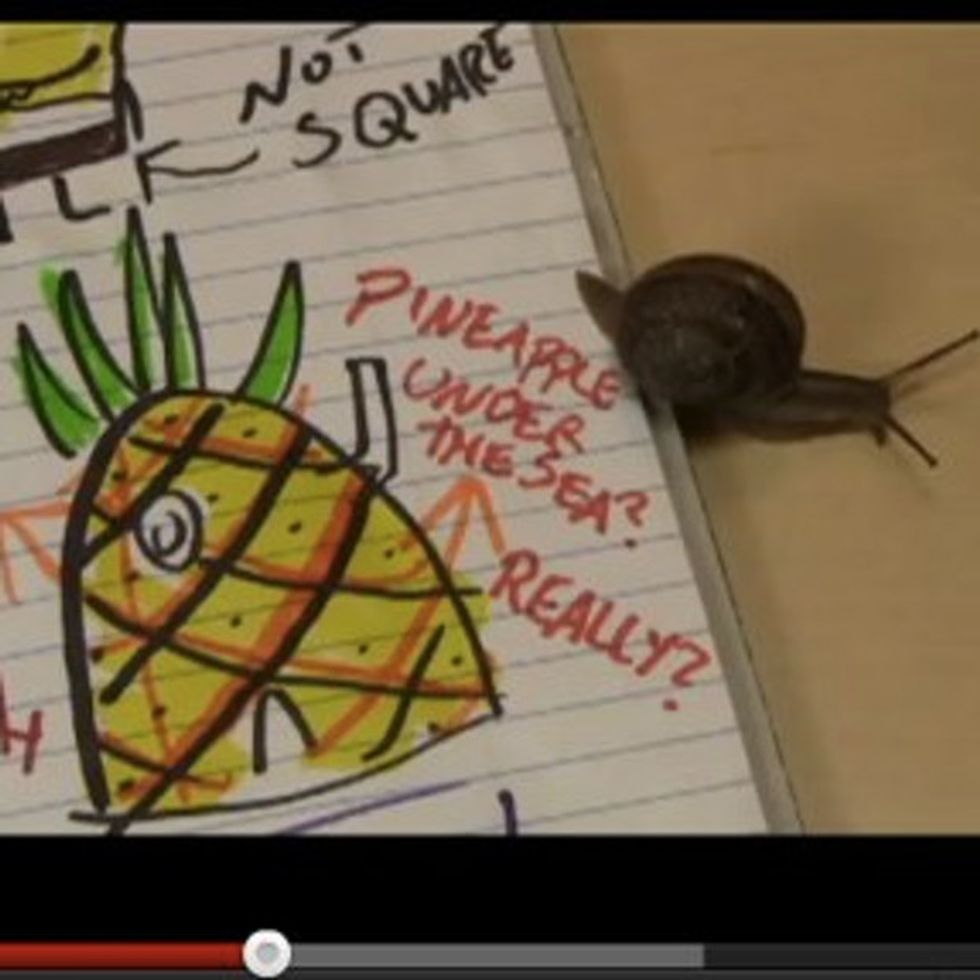 The Most Educational Video About Spongebob Squarepants You'll Ever See