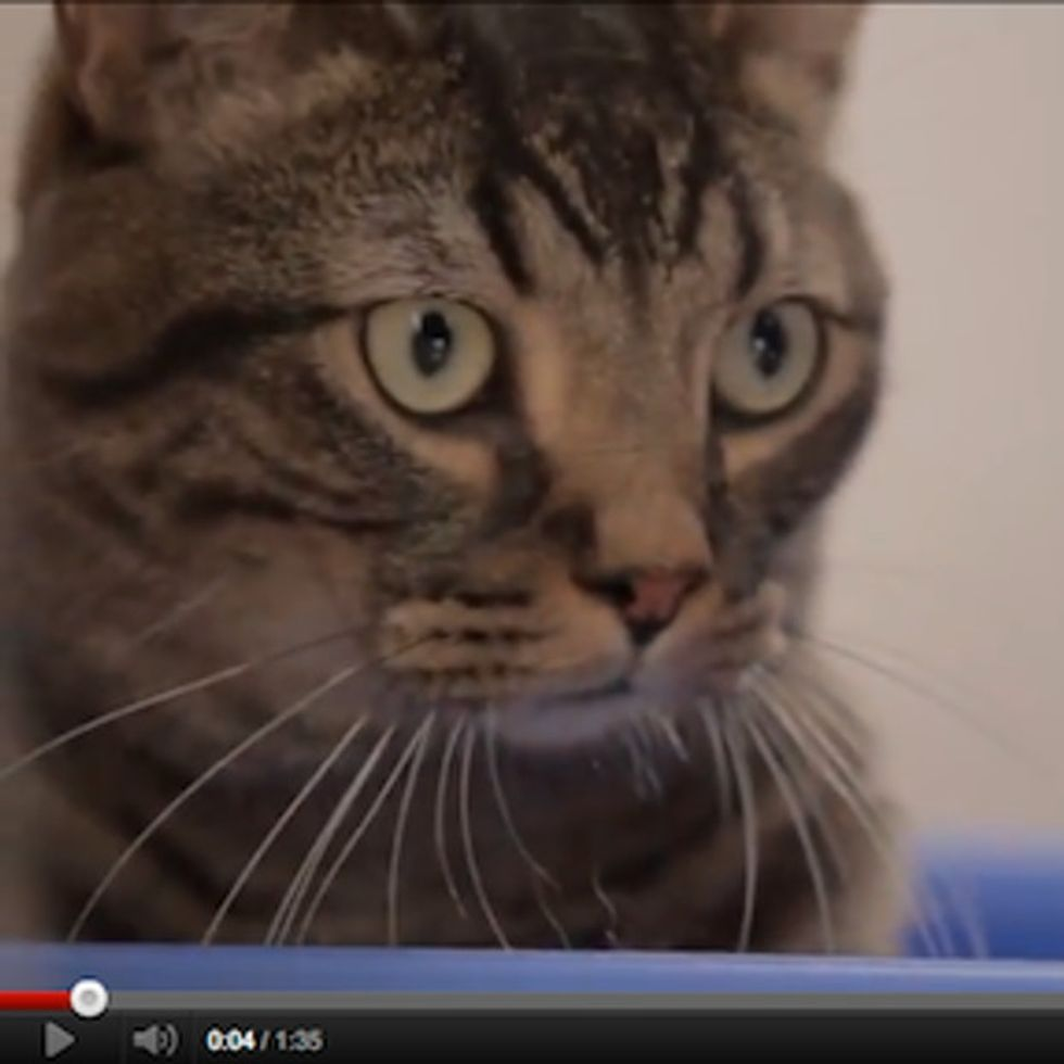 Wait A Minute, Did That Adorable Cat Just Recycle?