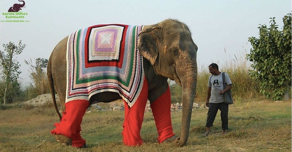 Elephants in sweaters are adorable. Until you realize why they have them.