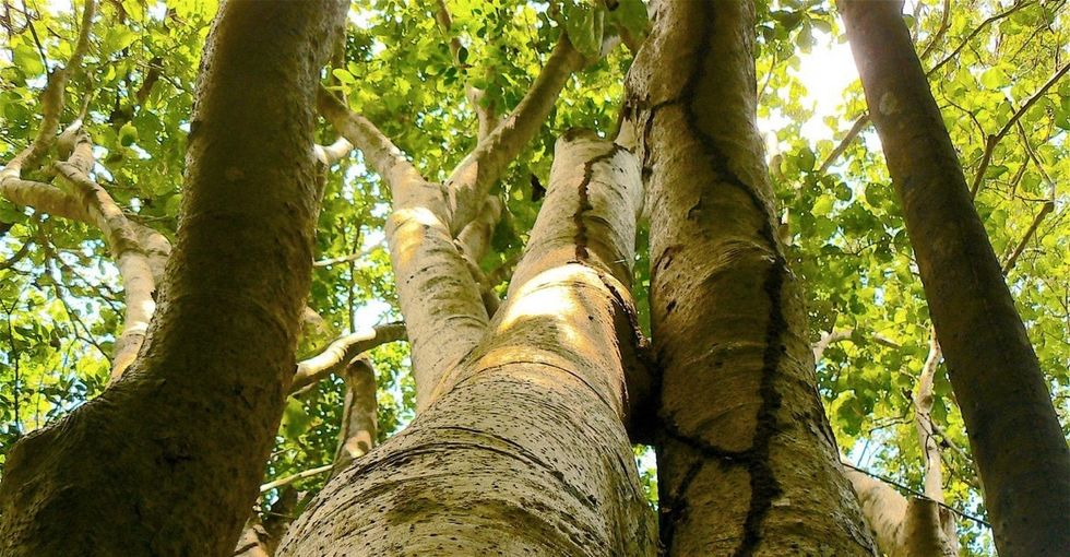 These Puerto Rican 'bird-eating' trees were just named after 2 powerhouse women.